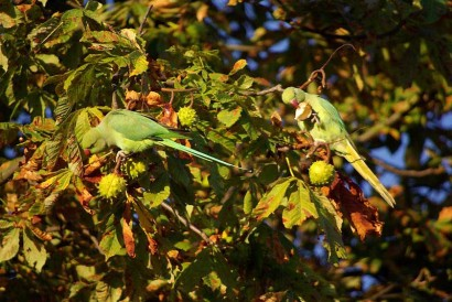 picture of two green parakeets
