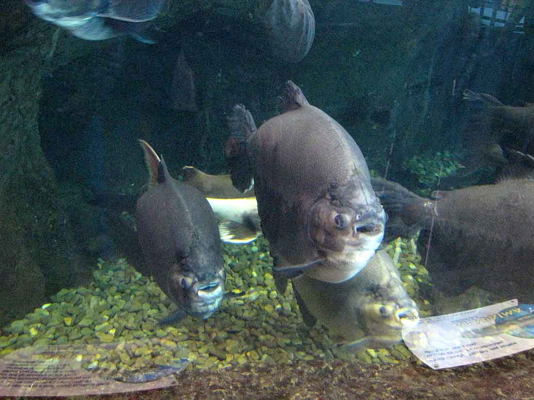 Fish in ripleys aquarium - Picture Of Big Fish