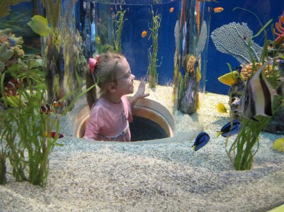 photo of child inside aquarium
