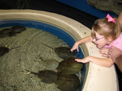 photo of child looking at horseshoe crabs