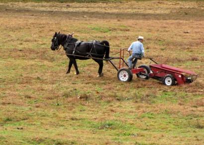 photo of horse pulling farm equipment