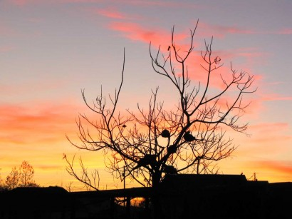 picture of sunset and chickens in tree