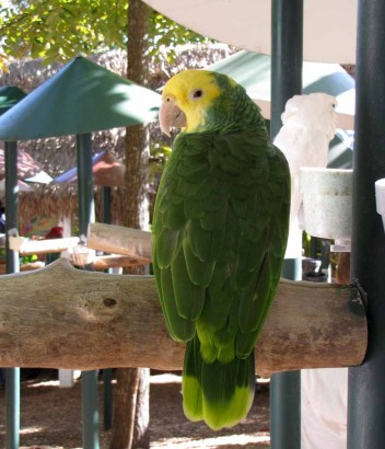 picture of parrot