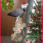 picture of parrot with santa hat