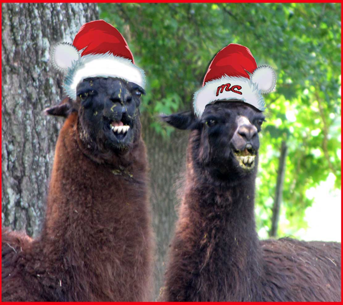 On the second day of Christmas. . . | Rural Ramblings...