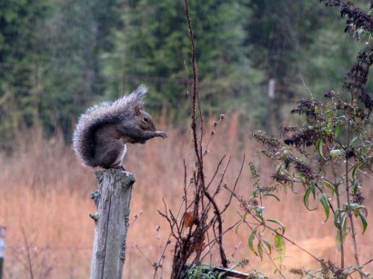 picture of squirrel on fencepost