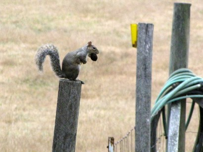 picture of squirrel with nut