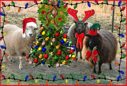 picture of ewes with hats