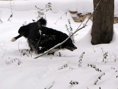 picture of dog peeing in snow
