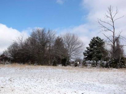 picture of field and trees and snow
