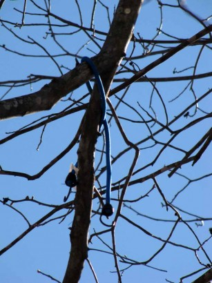 pictue of bungee cord in tree