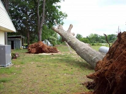 tornado aftermath - tree down