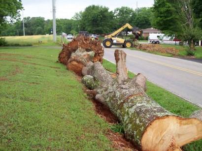 tornado aftermath - tree in ditch