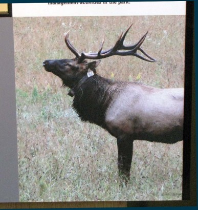 picture of elk picture on storyboard