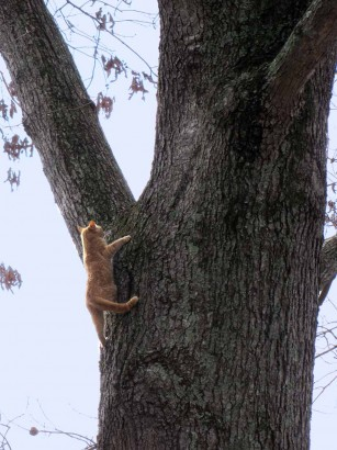 picture of cat climbing down tree