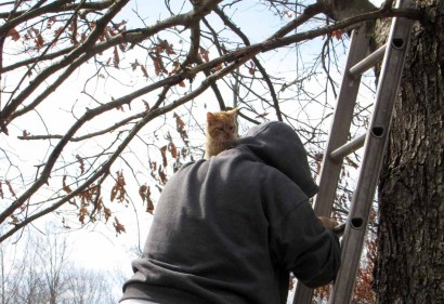 picture of cat on man's shoulder