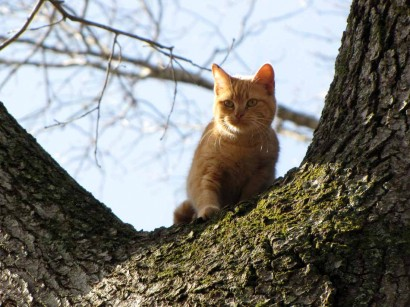 picture of kitten up in a tree