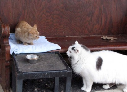 picture of kitten and cat