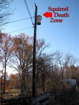 picture of squirrel killing zone