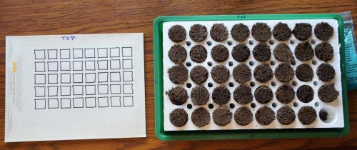 pictured of seeds planted