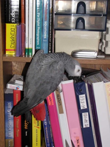 picture of parrot on books