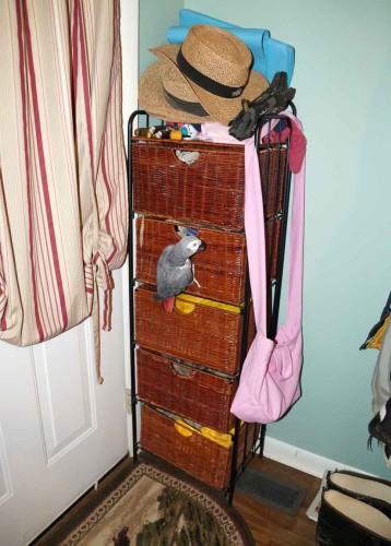 parrot on side of wicker drawer