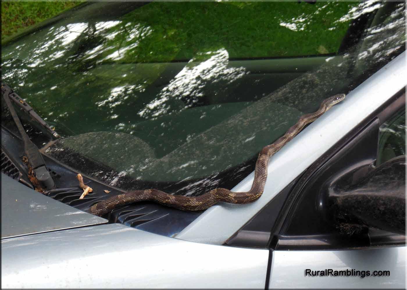 fantasy snake car 2013 - photo #25