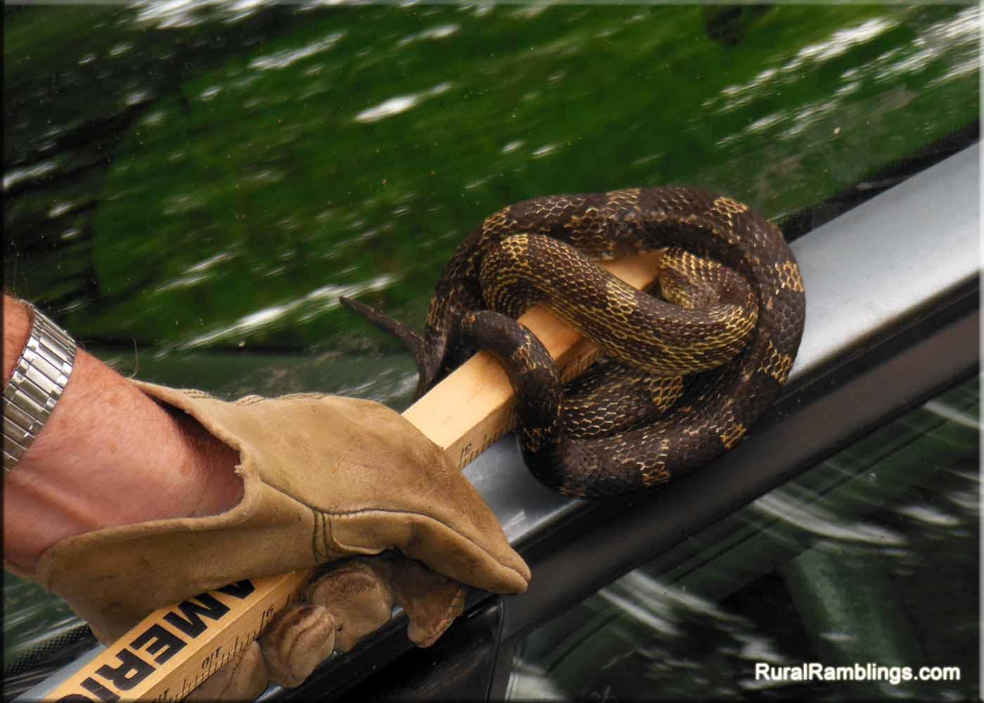 fantasy snake car 2013 - photo #31