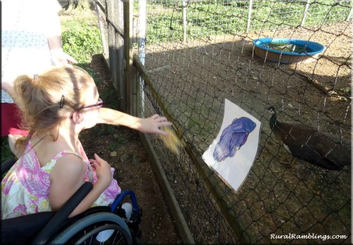 pic of girl feeding peacock