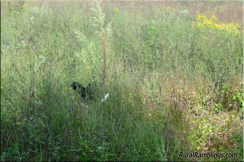 dogs-in-weeds