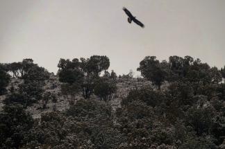 28 eagle 11-47am
