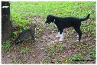 2004 Toby 08-31 cat
