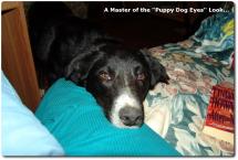 01 puppy-dog-eyes
