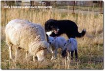 02 2005_03-29 Toby Coconut lambs