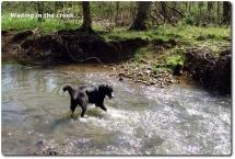 05 2005_04-09 Toby creek
