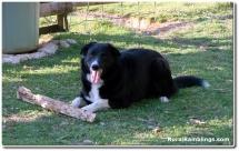 11 2007_04-30 Toby stick