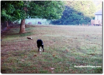 14 2007_ 06-10 Toby chase rabbit