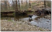 20 2009_02-21 Toby creek