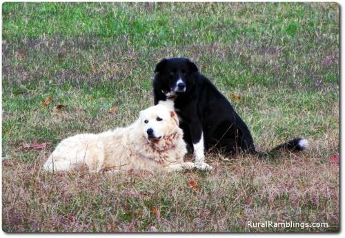 26 2009_10-30 Neffie Toby