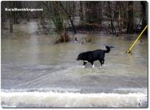 27 2010_02-05 Toby flood waters