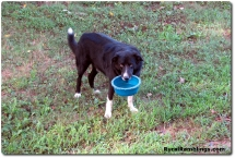 30 2010_08-25 Toby food bowl