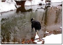 32 2011_01-10 Toby creek snow