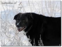 34 2011_01-14 Toby snow