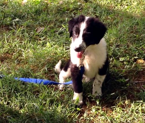07-04-16 pup