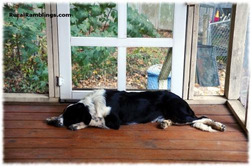 pic of sleeping ES pup